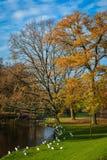Осень в парке, Дания Стоковая Фотография RF