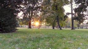 Осень в парке, деревьях и траве сток-видео