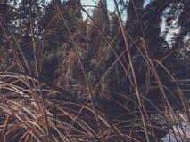 Осень в парке, деревья, тростники около пруда, отражения деревьев в пруде Падая листва Цветы осени стоковая фотография rf