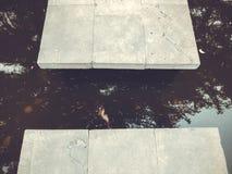 Осень в парке, деревья, тростники около пруда, отражения деревьев в пруде Падая листва Цветы осени стоковое изображение