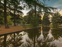 Осень в парке, деревья, тростники около пруда, отражения деревьев в пруде Падая листва Цветы осени стоковые изображения