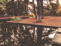 Осень в парке, деревья, тростники около пруда, отражения деревьев в пруде Падая листва Цветы осени стоковые фото