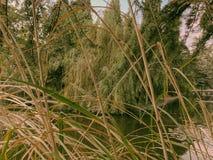 Осень в парке, деревья, тростники около пруда, отражения деревьев в пруде Падая листва Цветы осени стоковые фотографии rf