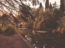 Осень в парке, деревья, тростники около пруда, отражения деревьев в пруде Падая листва Цветы осени стоковые изображения rf