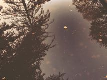 Осень в парке, деревья, тростники около пруда, отражения деревьев в пруде Падая листва Цветы осени стоковая фотография