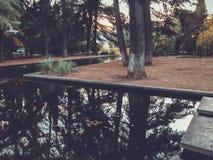 Осень в парке, деревья, тростники около пруда, отражения деревьев в пруде Падая листва Цветы осени стоковое фото rf