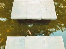 Осень в парке, деревья, тростники около пруда, отражения деревьев в пруде Падая листва Цвета осени стоковые изображения rf