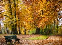 Осень в парке Красивые деревья листвы золота с стендом Штилевое место стоковое фото rf