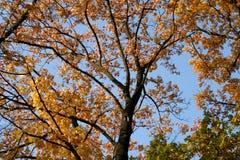 Осень в парке, Польша стоковые изображения rf
