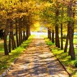 Осень в парке Сезон падения стоковое изображение