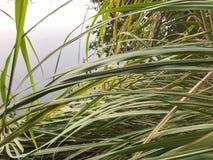 Осень в парке, тростники около пруда Падая листва Цветы осени стоковое фото