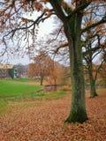 Осень в парке, университет Орхуса, Дания стоковые фотографии rf