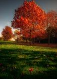 Осень в парке Стоковое Изображение RF