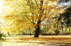 Осень в парке Стоковые Изображения RF