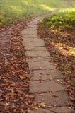 Осень в парке Стоковая Фотография