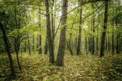 Осень в парке Стоковое Изображение