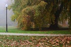 Осень в парке Стоковое фото RF