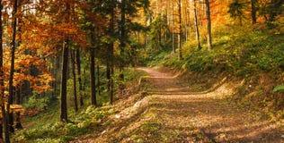 Осень в парке dei Fiori Campo, Варезе Стоковая Фотография