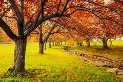 Осень в парке Hurd, Дувре, Нью-Джерси стоковые изображения