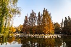Осень в парке Zhongshan, Qingdao, Китае стоковое фото rf