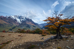 Осень в Патагонии Стоковые Изображения