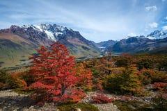 Осень в Патагонии Стоковые Фото