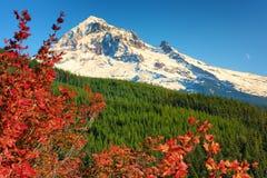 Осень в пропуске Mt Lolo Национальный лес клобука стоковые фото
