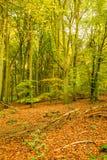 Осень в пуще Стоковое Изображение RF