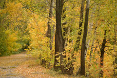 Осень в пуще Стоковое Изображение