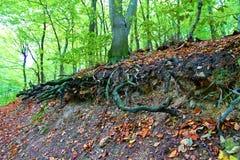 Осень в пуще Стоковая Фотография
