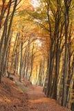 Осень в пуще Стоковое Фото