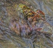 Осень в пуще стоковые фотографии rf