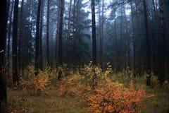 Осень в пуще стоковое фото rf