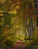 Осень в древесинах Стоковые Изображения