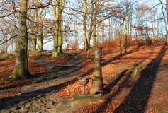 Осень в древесинах Стоковое Фото