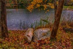 Осень в древесинах Стоковые Фотографии RF