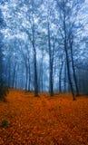 Осень в древесинах, Geres Стоковое фото RF