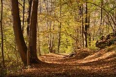 Осень в древесине Стоковые Изображения