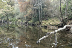Осень в реке Стоковое Изображение