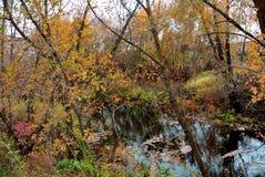 Осень в роще Стоковое Изображение RF