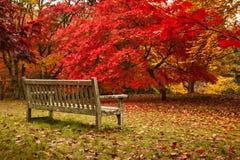 Осень в саде Bodnant Стоковая Фотография RF
