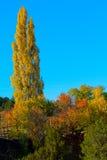 Осень в Санта-Фе Стоковое Изображение RF