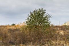 Осень в степи Tavri Стоковые Изображения