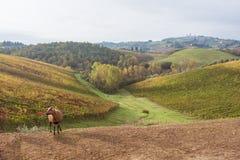 Осень в Тоскане, Италии стоковое изображение