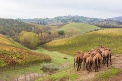 Осень в Тоскане, Италии стоковые изображения rf
