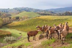 Осень в Тоскане, Италии стоковое изображение rf