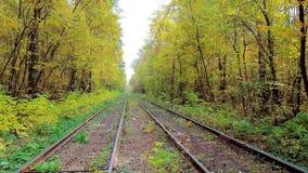 Осень в украинском лесе с tramline акции видеоматериалы