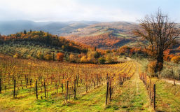 Осень в холмах chianti стоковая фотография