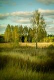 Осень в центральной России стоковые изображения rf
