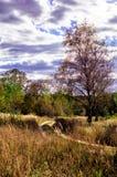 Осень в центральной России стоковое изображение